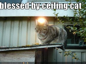 blessed by ceiling cat