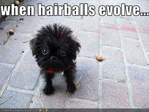 when hairballs evolve....