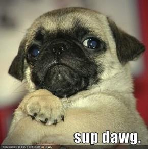 sup dawg.