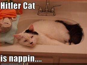Hitler Cat  is nappin....
