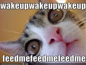wakeupwakeupwakeup  feedmefeedmefeedme