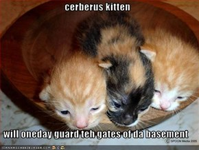 cerberus kitten  will oneday guard teh gates of da basement