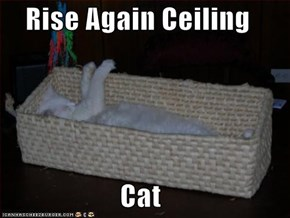 Rise Again Ceiling  Cat