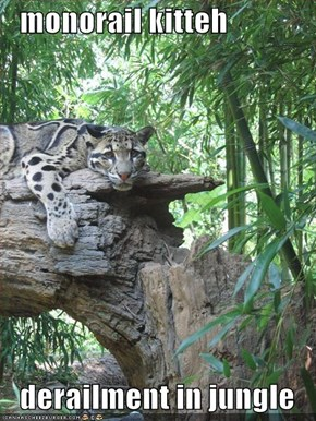 monorail kitteh     derailment in jungle