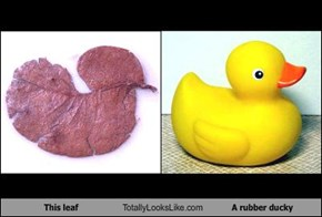 This leaf Totally Looks Like A rubber ducky