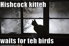 Hishcock kitteh  waits for teh birds