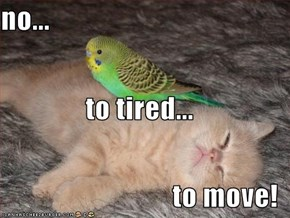 no... to tired... to move!