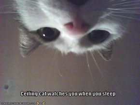 Ceiling cat watches you when you sleep
