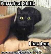 Purrrvival Skillz  I haz dem