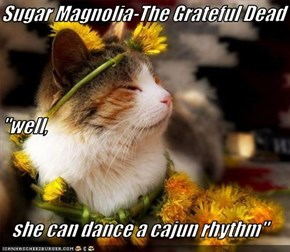 "Sugar Magnolia-The Grateful Dead ""well, she can dance a cajun rhythm"""
