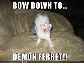 BOW DOWN TO...  DEMON FERRET!!