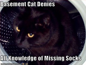 Basement Cat Denies  All Knowledge of Missing Socks