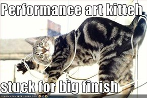 Performance art kitteh  stuck for big finish