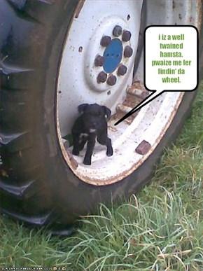 i iz a well twained hamsta. pwaize me fer findin' da wheel.