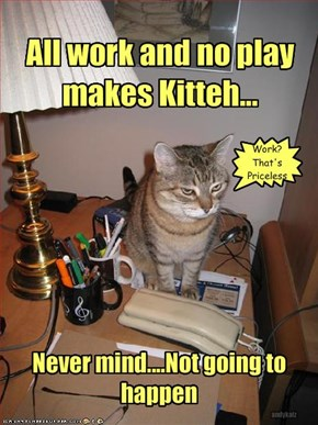 All work and no play makes Kitteh...