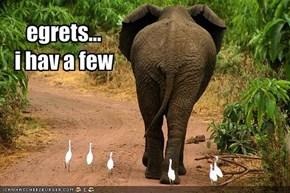 egrets...i hav a few