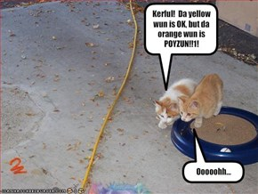 Kerful!  Da yellow wun is OK, but da orange wun is POYZUN!!1!