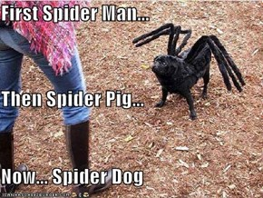 First Spider Man... Then Spider Pig... Now... Spider Dog