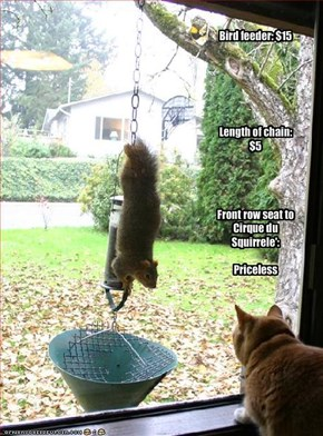 Bird feeder: $15Length of chain: $5Front row seat to Cirque du Squirrele':Priceless