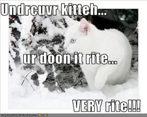 Undrcuvr kitteh... ur doon it rite...  VERY rite!!!