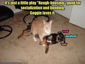 """It's just a little play """"Rough-housing"""" ,good for socialization and bonding.Goggie loves it."""