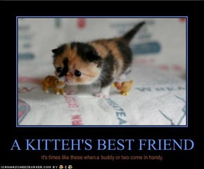 A KITTEH'S BEST FRIEND