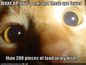 WAKE UP!  It's 3 a.m. and there are fewer  than 200 pieces of food in my dish!