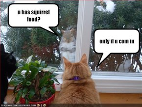 u has squirrel food?