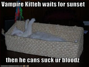 Vampire Kitteh waits for sunset  then he cans suck ur bloodz