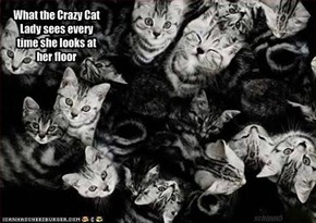 What the Crazy Cat Lady sees every time she looks at her floor