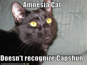 Amnesia Cat  Doesn't recognize Capshun