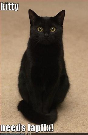 kitty  needs lapfix!