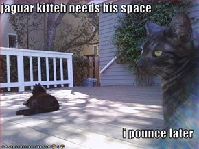 jaguar kitteh needs his space  i pounce later