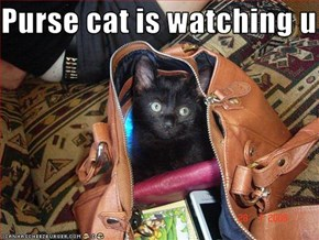 Purse cat is watching u
