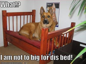 What!?  I am not to big for dis bed!