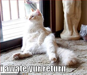 i awate yur return