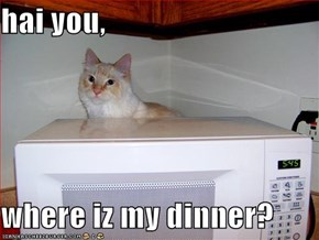 hai you,   where iz my dinner?