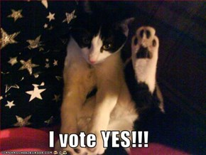 I vote YES!!!