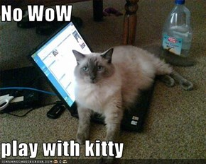 No WoW  play with kitty