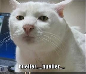bueller.....bueller....