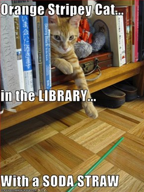 Orange Stripey Cat... in the LIBRARY... With a SODA STRAW