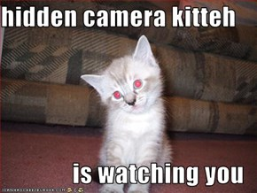 hidden camera kitteh  is watching you