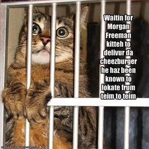 Waitin for Morgan Freeman kitteh to delivur da cheezburger he haz been known to lokate frum teim to teim