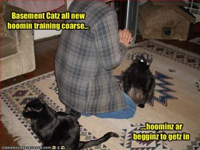 Basement Catz all new hoomin training coarse...