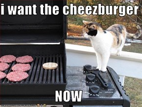 i want the cheezburger  NOW