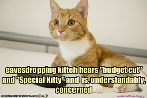 "eavesdropping kitteh hears ""budget cut"" and ""Special Kitty"" and  is, understandably, concerned"