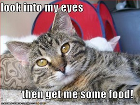 look into my eyes  then get me some food!