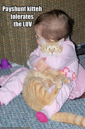 Payshunt kitteh tolerates