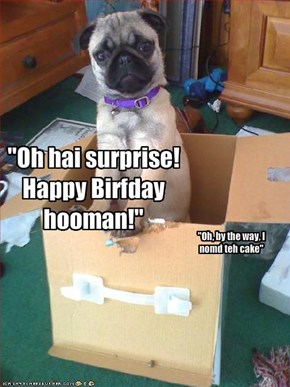 """Oh hai surprise! Happy Birfday hooman!"""