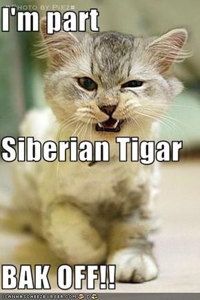 I'm part Siberian Tigar BAK OFF!!